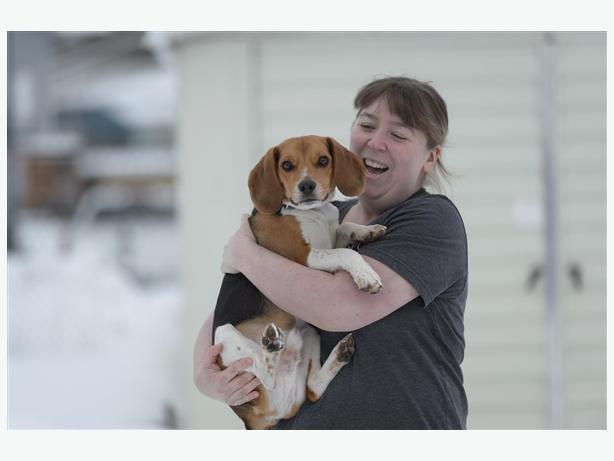 Vinny - Beagle Dog