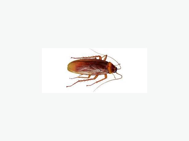 METRO-VAN Pest-control bugs & rodents gone!