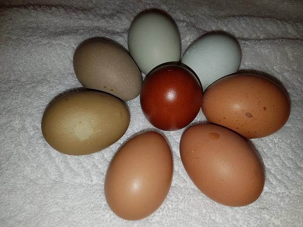 Farm fresh, free range, organically fed, rainbow eggs!