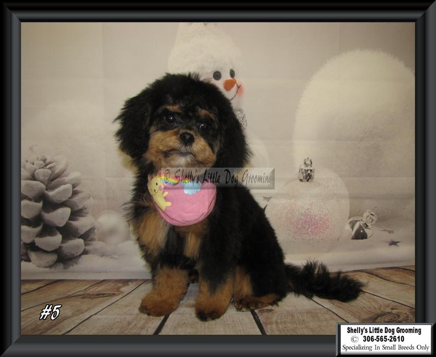 Vernon Dog Grooming