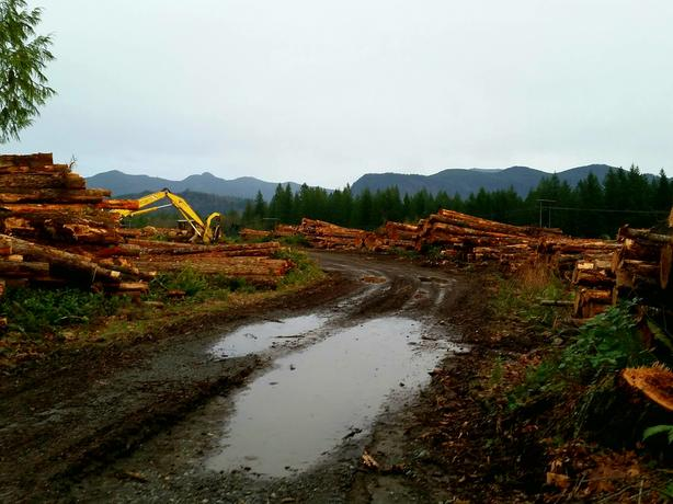Timber Harvesting Logging Company Thurston Lewis County