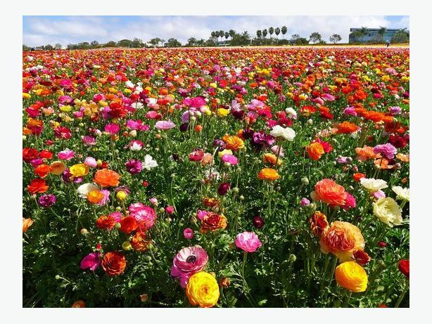 farmland available for flower production
