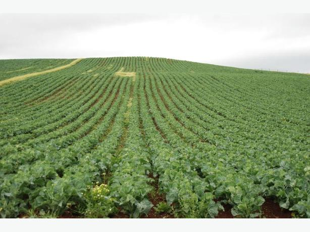 Farming plot available for vegetable production 10-20-40-100 acres