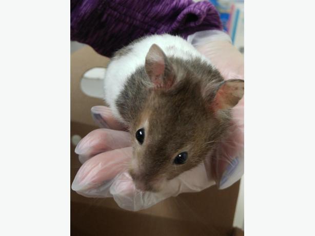 Matthew - Hamster Small Animal