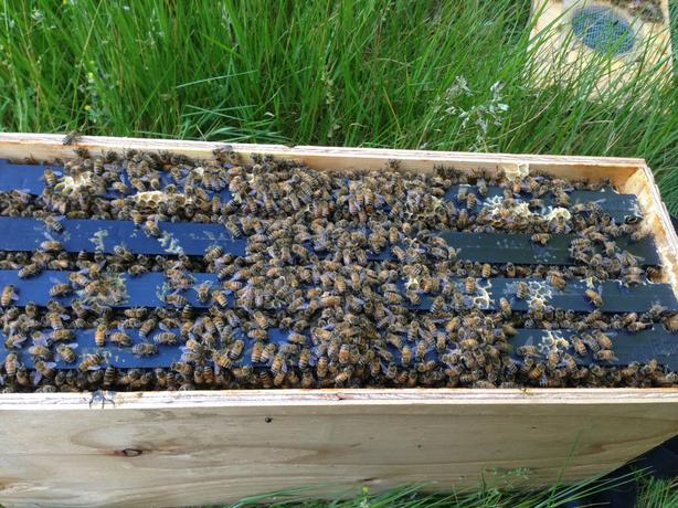 FOR SALE: BEES BEES BEES!!!