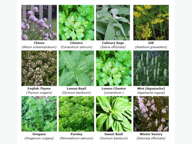 Chefs' Dream Culinary Herb Collection