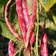Organic Seed Sale