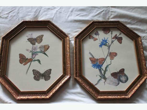Framed butterfly prints