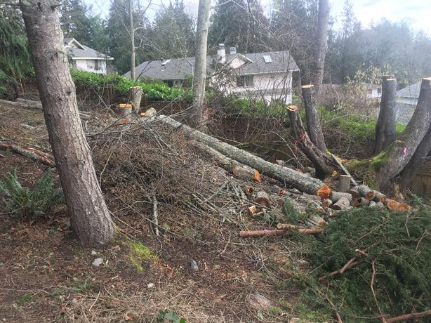 FOR TRADE: FOR-TRADE: Fire wood(and quad workout) for clearing my yard