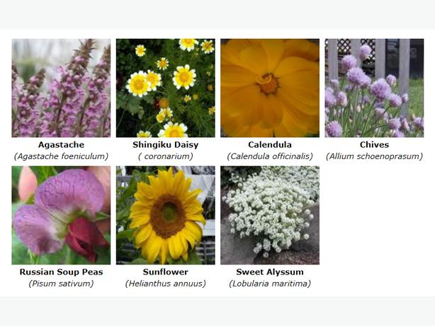 Grow your own Edible Flowers easily