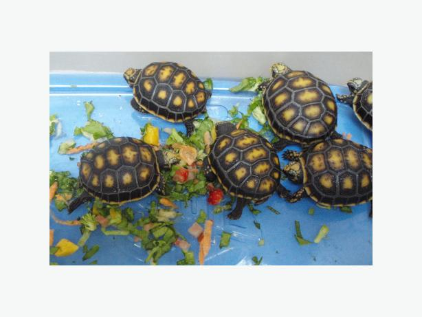 Healthy Tortoises/turtles/snakes/lizards available