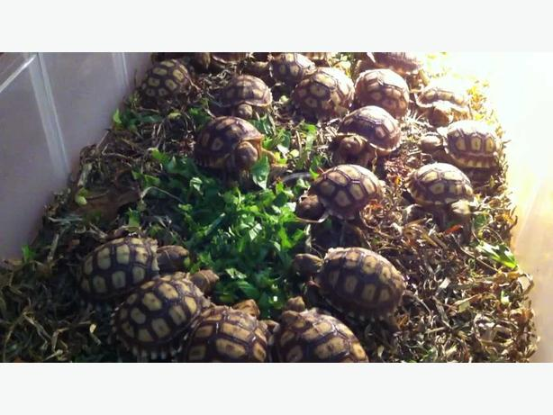 Tortoises/turtles/snakes/lizards available