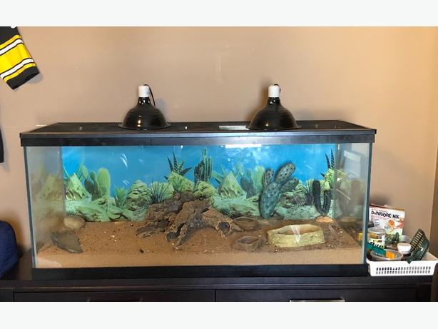75 gallon fish/reptile tank