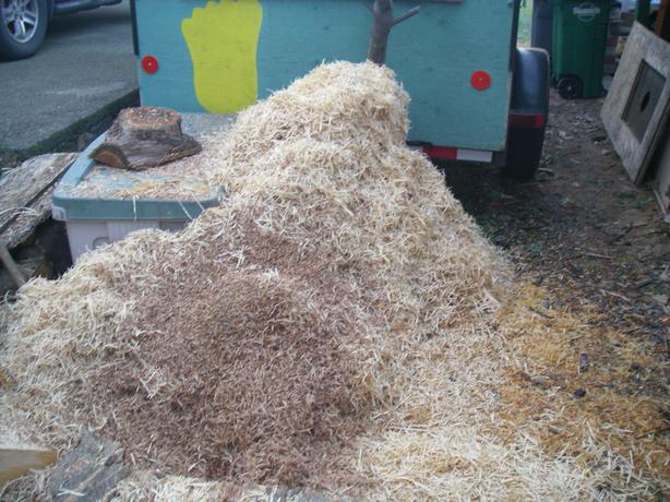 FREE: fresh wood shavings