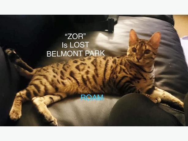 ROAM ALERT...Zora is lost in Belmont Park