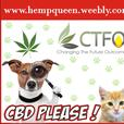 CBD Oil Products for Health and Wellness