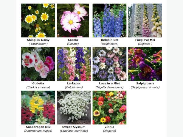 Bee Attracting Garden