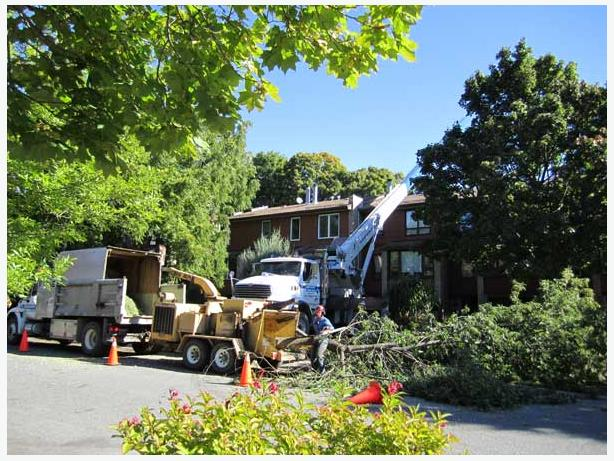 Calgary Tree Removal Business For Sale