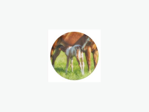 Dreamy, new horse foal with Mama Plate, nice GIFT collectable