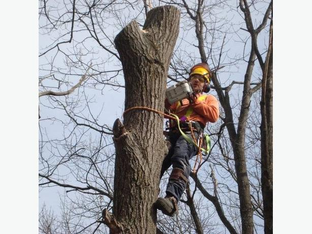 Tree Service    /     Fully insured