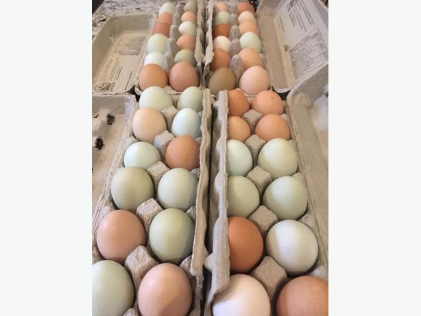 Beautiful free range eggs for sale