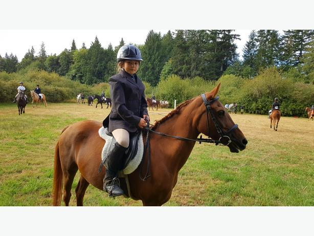 Beautiful Hunter Pony