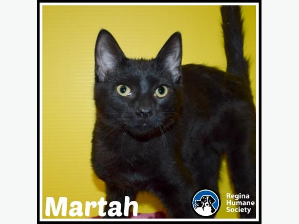 Martah* - Domestic Short Hair Kitten