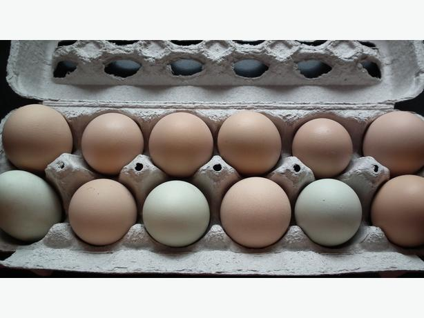 Farm Fresh Eggs - Middleville