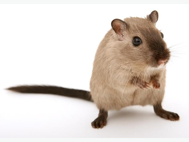 Only ~ $37 ~ Pest Control Windsor Ontario