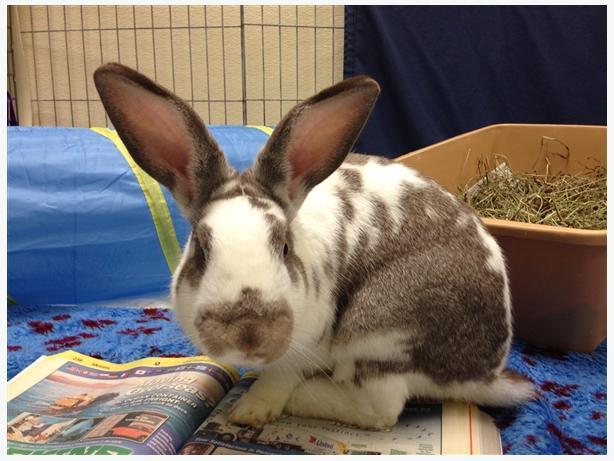 Lenny - Rex Rabbit