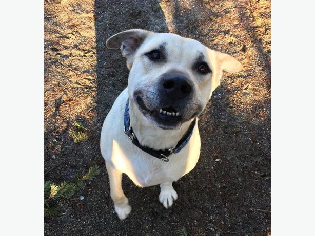 Mila - Pit Bull Terrier Dog