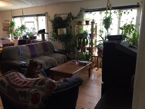 Room for Rent/House to Share