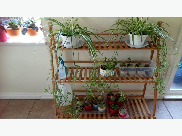 bamboo flower rack, 100 cm wide