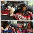 Bonded pair for adoption