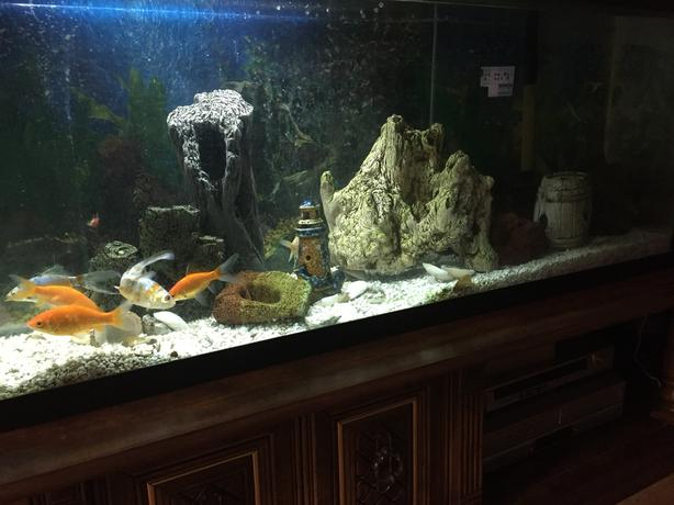 Aquarium fish 50 Gal. (200L) with decorations, gravel etc.