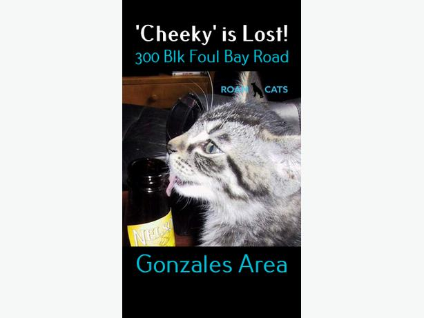ROAM ALERT LOST CAT 'CHEEKY'
