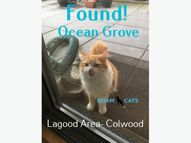 ROAM Alert - Found Cat -