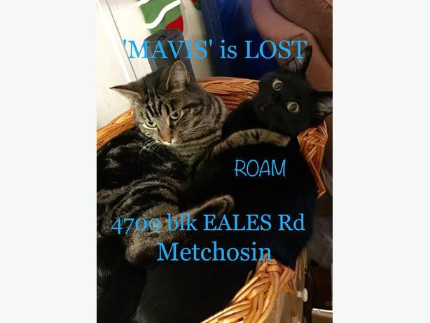 ROAM ALERT LOST CAT 'MAVIS'