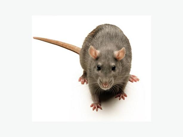 METROVAN Pest-control bugs & rodents gone!