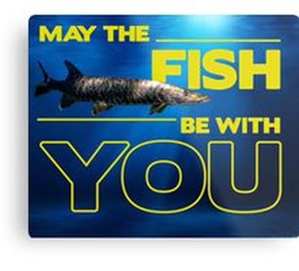 May the Fish be With You - great gift wall gift! NEW, order here