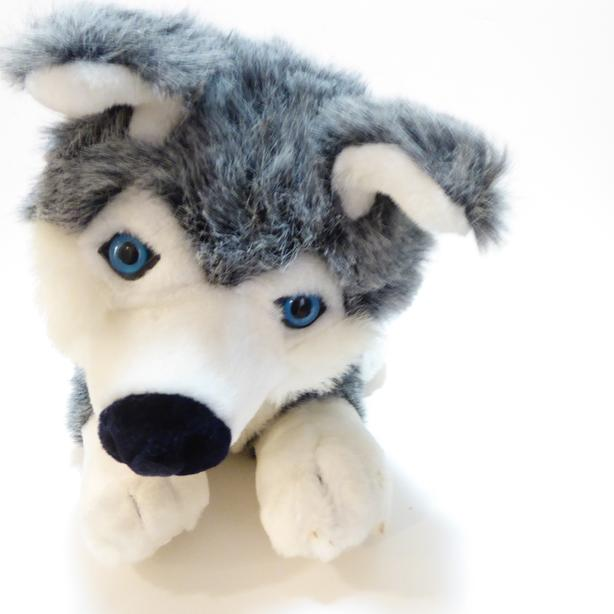 SOFT & CUTE HUSKY DOG -- MINT - NEVER PLAYED WITH