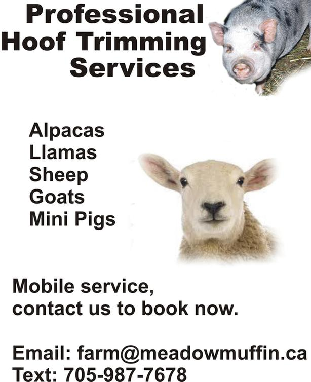 HOOF TRIMMING, sheep, goats, in area this week