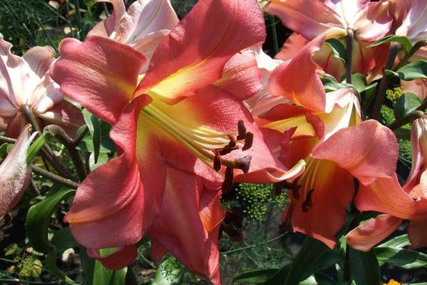 Plant & Garden Knick Knack Sale