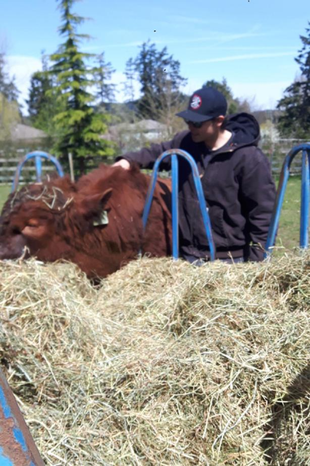 Registered Red Angus Bull , Cow & Calf