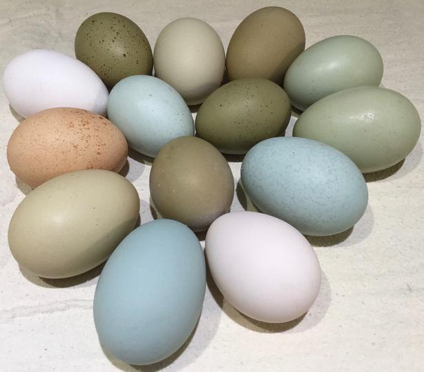 Funky Hatching Eggs