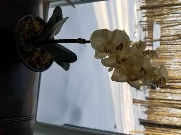 Orchid decor