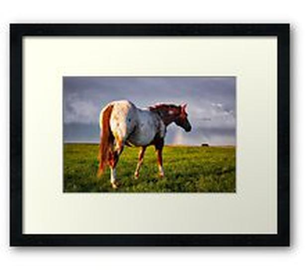 Appaloosa horse and rainbow, beautiful! Available on gift items here