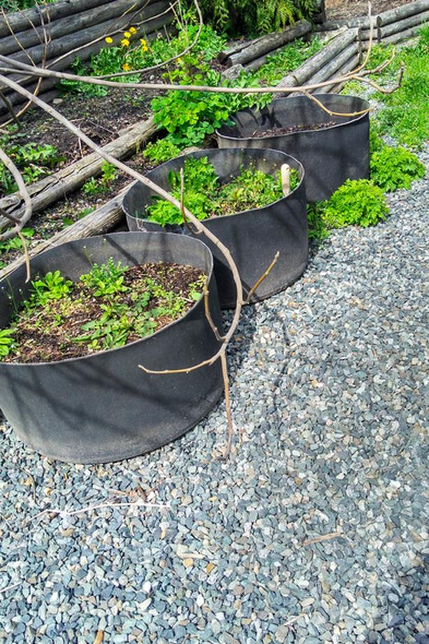 FREE: big tires great for planting in.