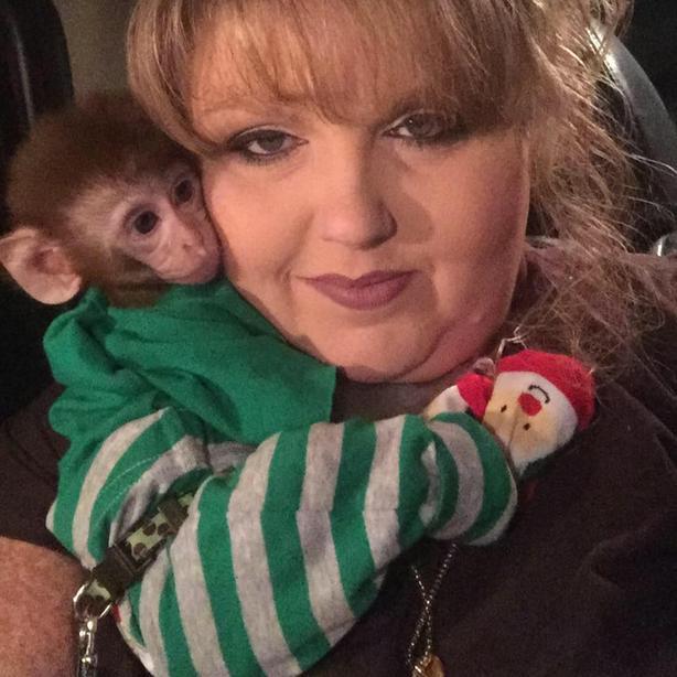 Baby monkey for adoption