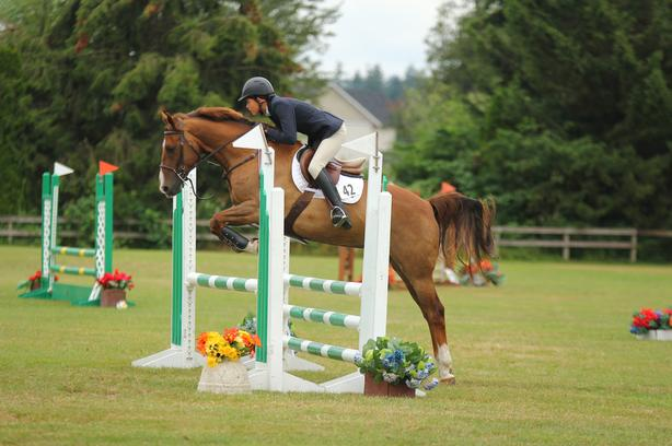 15 hh show horse for sale